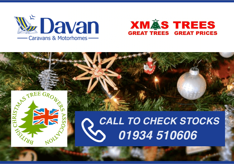2018 Christmas Trees for Sale in Worle